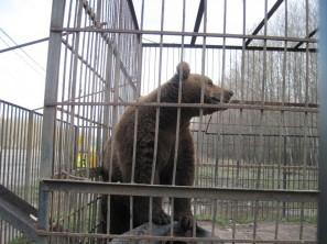 Кафе с медведем